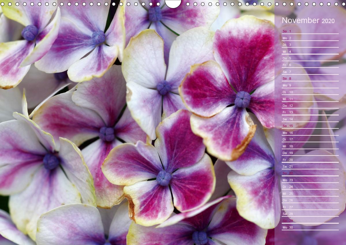 Hortensien / Geburtstagskalender - zum Schließen ins Bild klicken