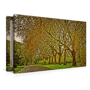 Premium Textil-Leinwand 90 cm x 60 cm quer Goldene Baumallee
