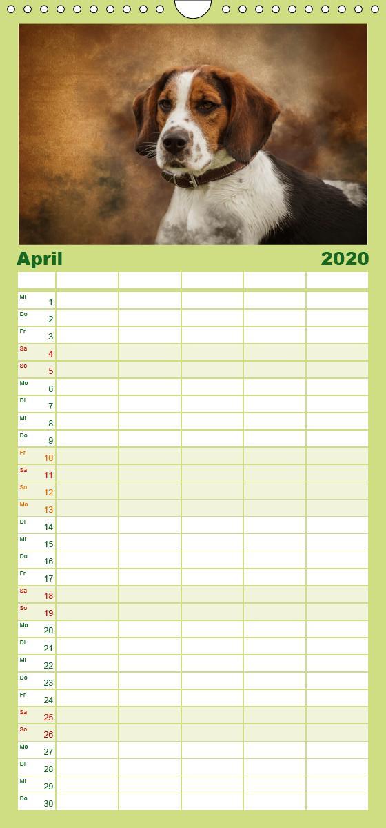 Jagdhunde im Portrait - Familienplaner hoch - zum Schließen ins Bild klicken