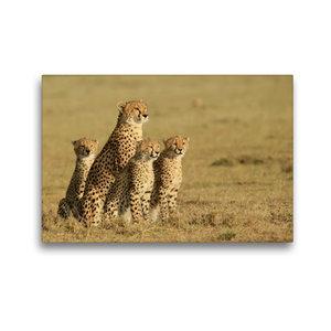 Premium Textil-Leinwand 45 cm x 30 cm quer Geparden auf Beutesuc