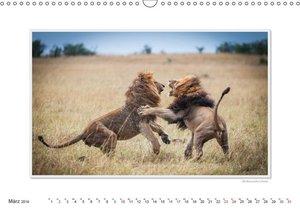 Emotionale Momente: Große Raubkatzen der Welt.CH-Version (Wandk