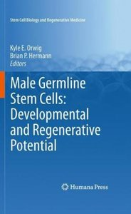 Male Germline Stem Cells: Developmental and Regenerative Potenti