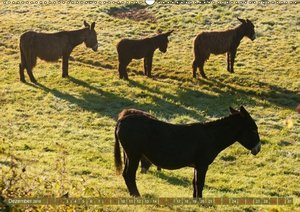 Wildes Deutschland - Unsere faszinierende Tierwelt (Tischkalende