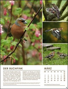 Vögel in unseren Gärten Posterkalender Kalender 2020