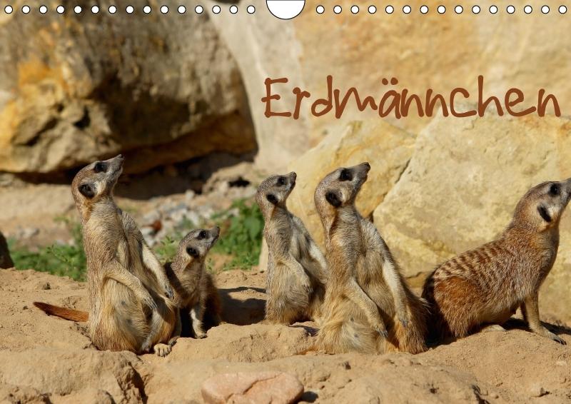 Erdmännchen - zum Schließen ins Bild klicken
