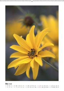Gelber Blütentraum