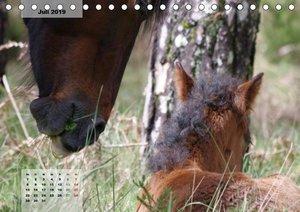 Nordportugal - Heimat der letzten wilden Pferde (Tischkalender 2