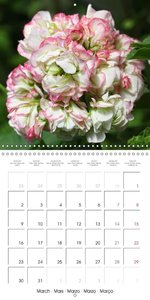 Pelargonium Dreams (Wall Calendar 2015 300 × 300 mm Square)