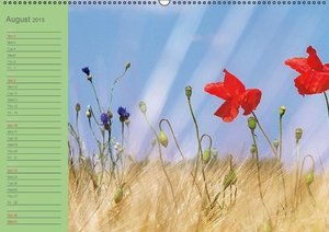 Poppies Dreams (Wall Calendar 2015 DIN A2 Landscape)