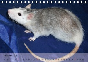 Ratten - Gelehrige Haustiere (Tischkalender 2016 DIN A5 quer)