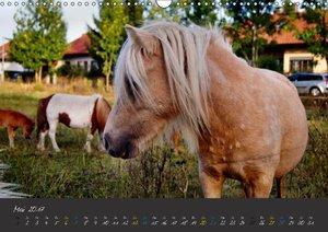 WunderschöneTierwelt (Wandkalender 2017 DIN A3 quer)
