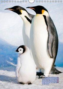 Freundschaft unter Pinguinen (Wandkalender 2016 DIN A4 hoch)