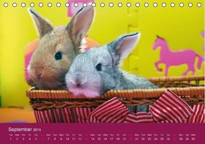 Sweet and wonderful house bunnies / UK-Version (Table Calendar 2