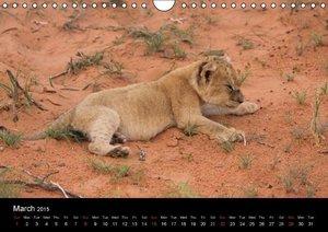 Baby animals - Lions (Wall Calendar 2015 DIN A4 Landscape)