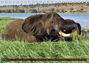 Stanzer, E: Elefanten in freier Wildbahn (Tischkalender 2015