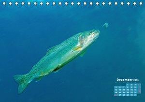 Fische: In Teichen und Flüssen (Tischkalender 2016 DIN A5 quer)