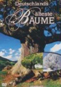 Deutschlands älteste Bäume