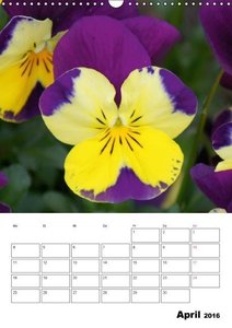 Frühlingserwachen (Wandkalender 2016 DIN A3 hoch)