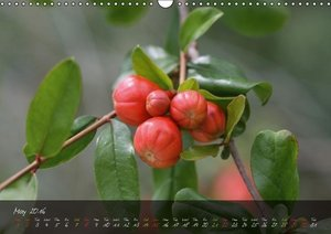 Poetry of Blossom Buds (Wall Calendar 2016 DIN A3 Landscape)