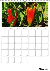 Frisches Gemüse (Wandkalender 2016 DIN A3 hoch)