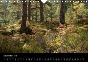 Scottish Highlands Flora and Fauna (Wall Calendar 2015 DIN A4 La