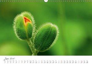 Charming Blossoms / 2015 (Wall Calendar 2015 DIN A3 Landscape)