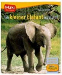 Ein kleiner Elefant wird groß