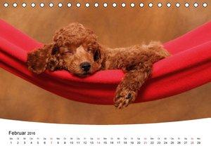 Süße Träume 2016 - schlafende Hundewelpen (Tischkalender 2016 DI