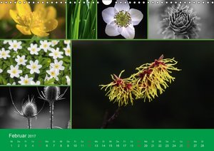 Florales zu jeder Jahreszeit