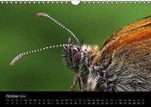 Butterflies in Tyrol (Wall Calendar 2015 DIN A4 Landscape)