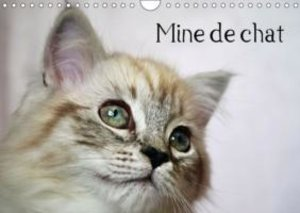 Mine de chat (Calendrier mural 2015 DIN A4 horizontal)