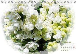 Blütenträume - ganz in weiß / CH-Version (Tischkalender 2016 DIN