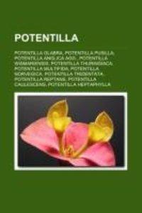 Potentilla