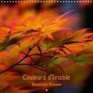 Biewer, B: Couleurs D'erable