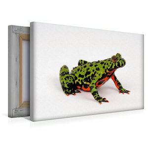 Premium Textil-Leinwand 45 cm x 30 cm quer Chinesische Rotbauchu