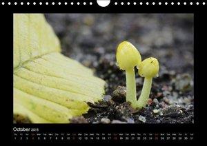 Fungi / UK-Version (Wall Calendar 2015 DIN A4 Landscape)