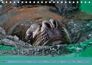 Robben - überall zuhause
