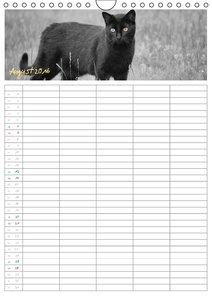Miezekatzen Planungskalender (Wandkalender 2016 DIN A4 hoch)