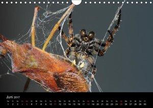 Unsere Spinnen - im Gespräch