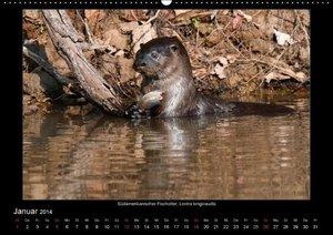 Tiere des Pantanal (Wandkalender 2014 DIN A3 quer)