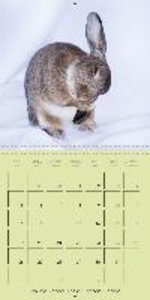 photogenic rabbits (Wall Calendar 2015 300 × 300 mm Square)