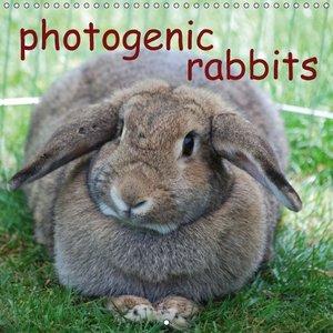 photogenic rabbits (Wall Calendar 2015 300 × 300 mm Square)
