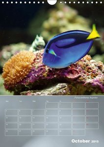 Colorful Reef Inhabitants (Wall Calendar 2015 DIN A4 Portrait)