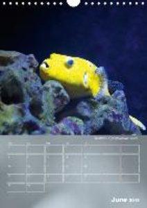 Colorful Reef Inhabitants (Wall Calendar 2015 DIN A4 Portrait)
