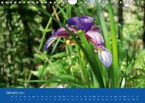 Wild Mountain Flowers of Croatia (Wall Calendar 2015 DIN A4 Land