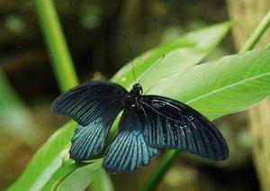 Zarte Schönheiten - Exotische Schmetterlinge (Posterbuch DIN A3