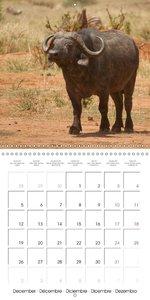 Wild animals Tanzania (Wall Calendar 2016 300 × 300 mm Square)