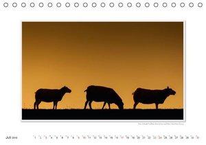 Emotionale Momente: Texel - Insel im Wattenmeer. (Tischkalender