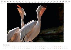 Einfach Tierisch (Tischkalender 2016 DIN A5 quer)