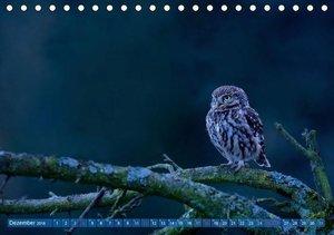 Wildes NRW - Beeindruckende Tierwelt (Tischkalender 2016 DIN A5